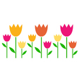 Colorful spring tulips in row isolated on white vector