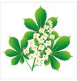 Horse chestnut flower isolated object vector