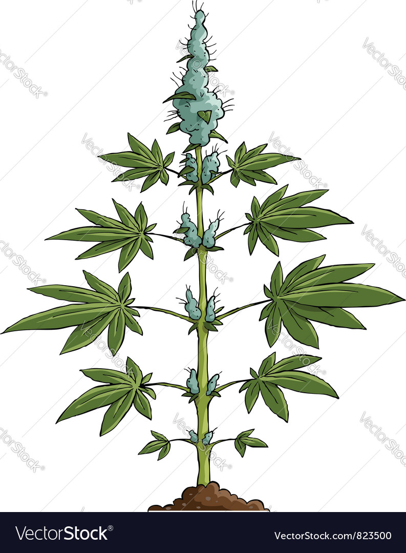 Cannabis vector | Price: 3 Credit (USD $3)