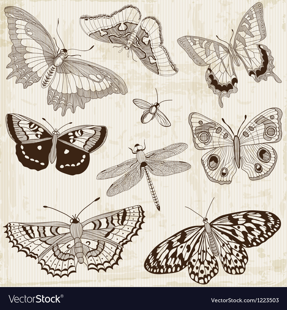Butterfly design elements vector | Price: 1 Credit (USD $1)