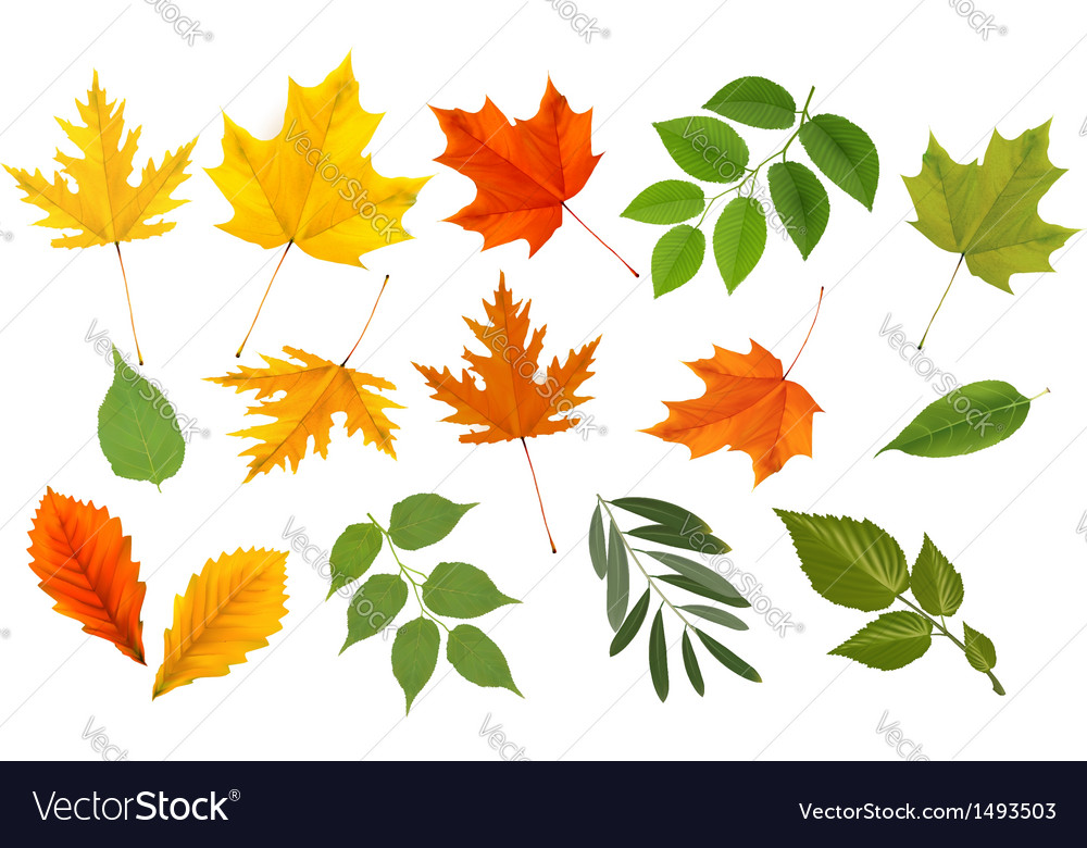 Colorful leaves collection vector | Price: 1 Credit (USD $1)