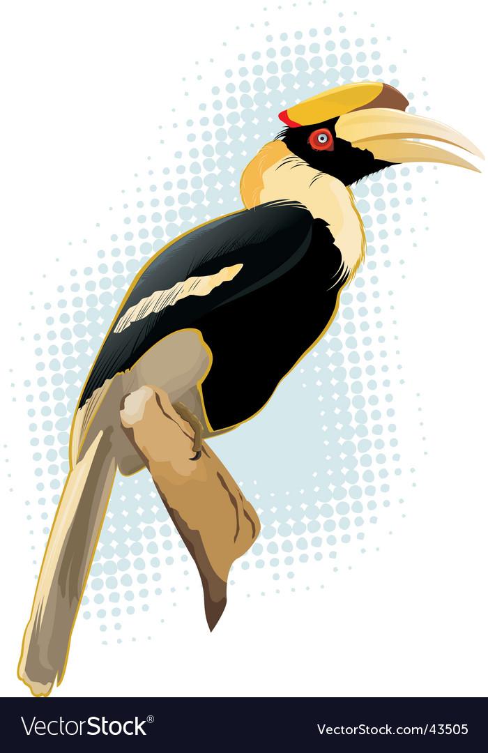 Hornbill vector | Price: 1 Credit (USD $1)