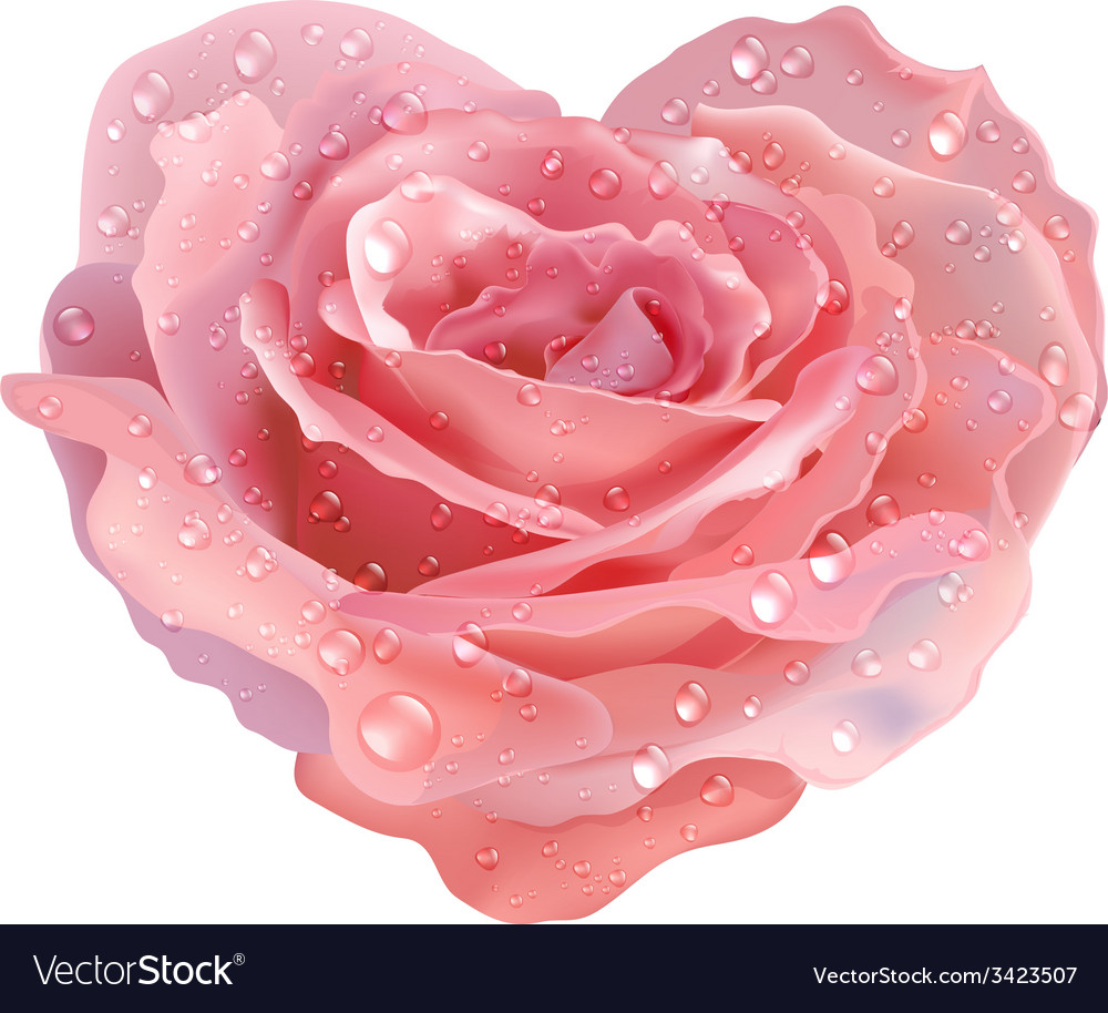 Heart-rose object flower on a white background vector | Price: 1 Credit (USD $1)