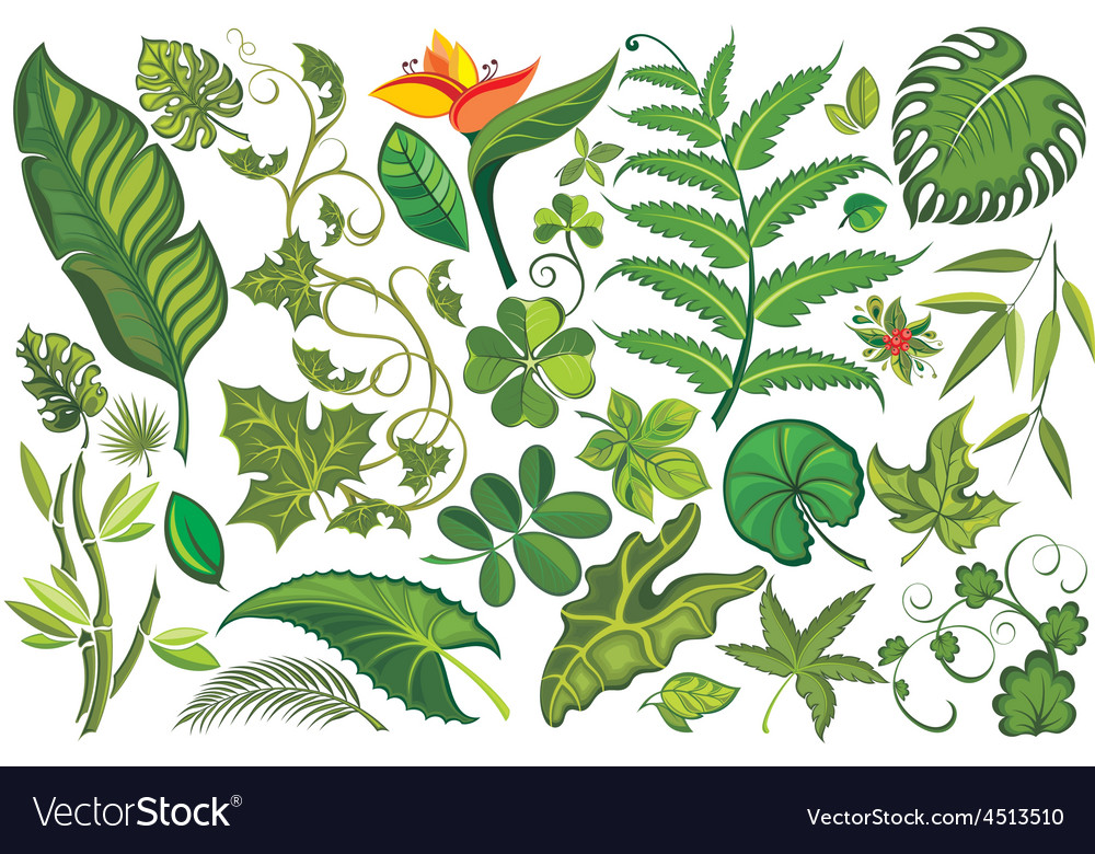 Set of tropical leaves vector