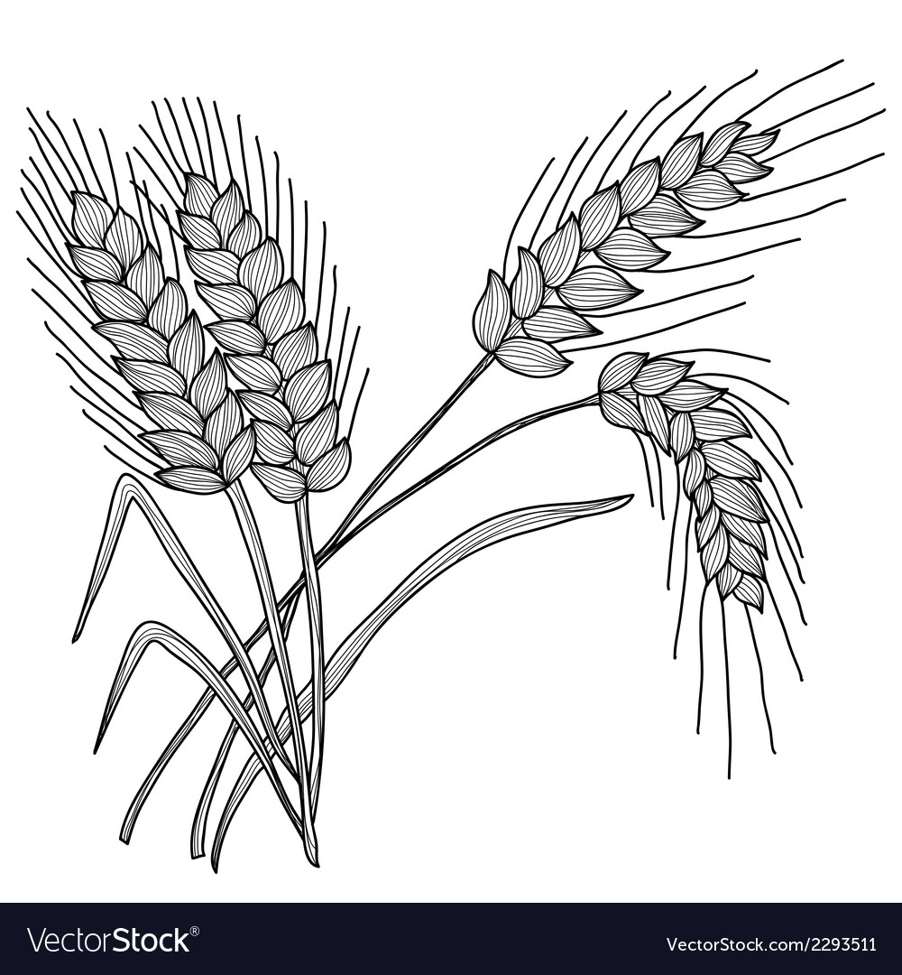 Decorative wheat vector | Price: 1 Credit (USD $1)
