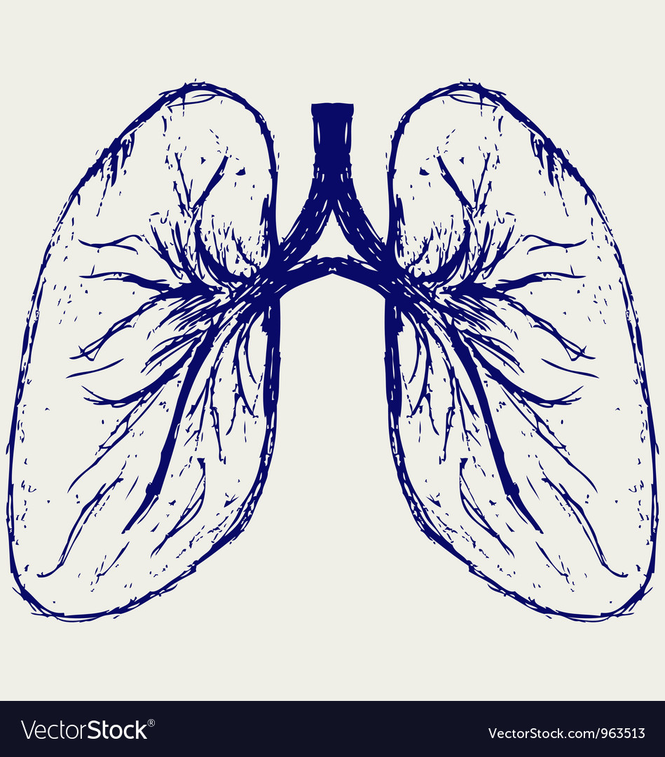 Lungs person vector | Price: 1 Credit (USD $1)
