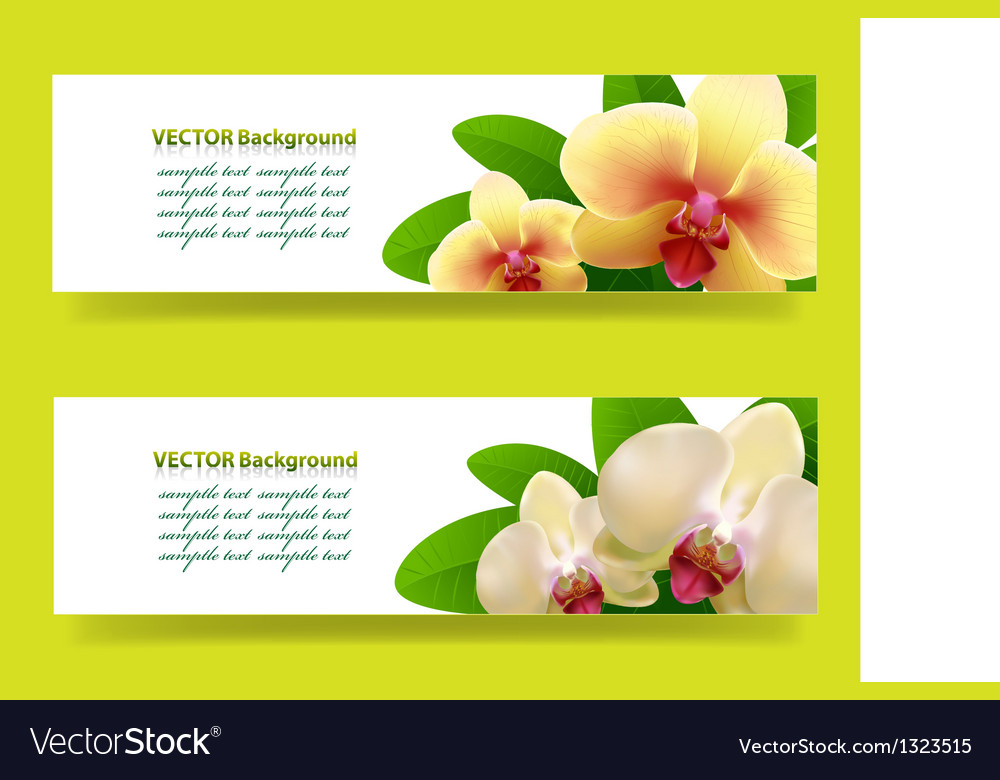 Banner with orchids floral background vector | Price: 1 Credit (USD $1)