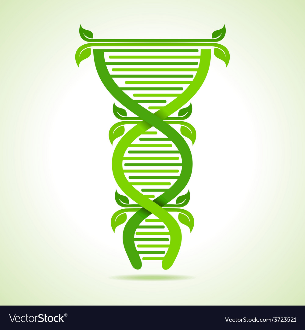 Ecology concept- leafs make a dna strand vector | Price: 1 Credit (USD $1)