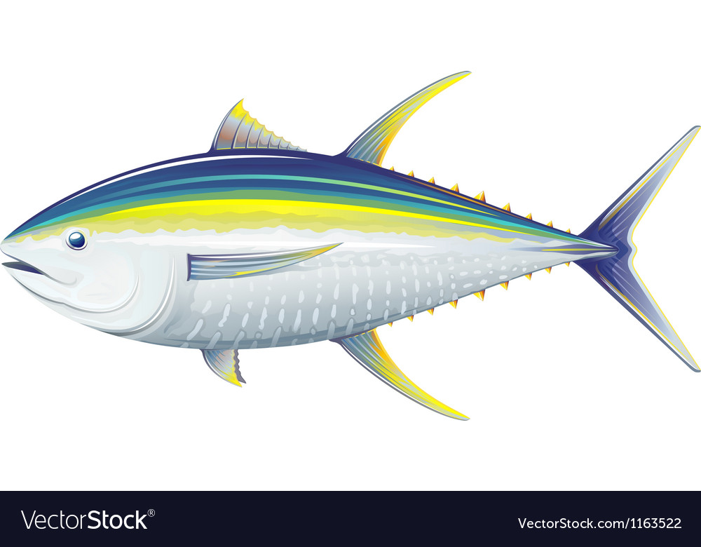Yellowfin tuna vector | Price: 1 Credit (USD $1)