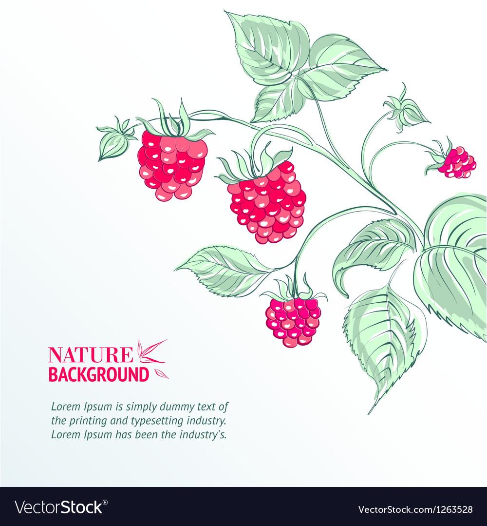Raspberry watercolor vector | Price: 1 Credit (USD $1)