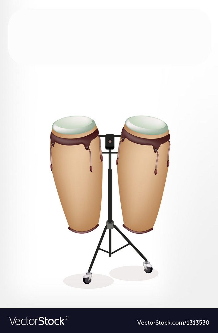 Beautiful congas with stand on white background vector | Price: 1 Credit (USD $1)