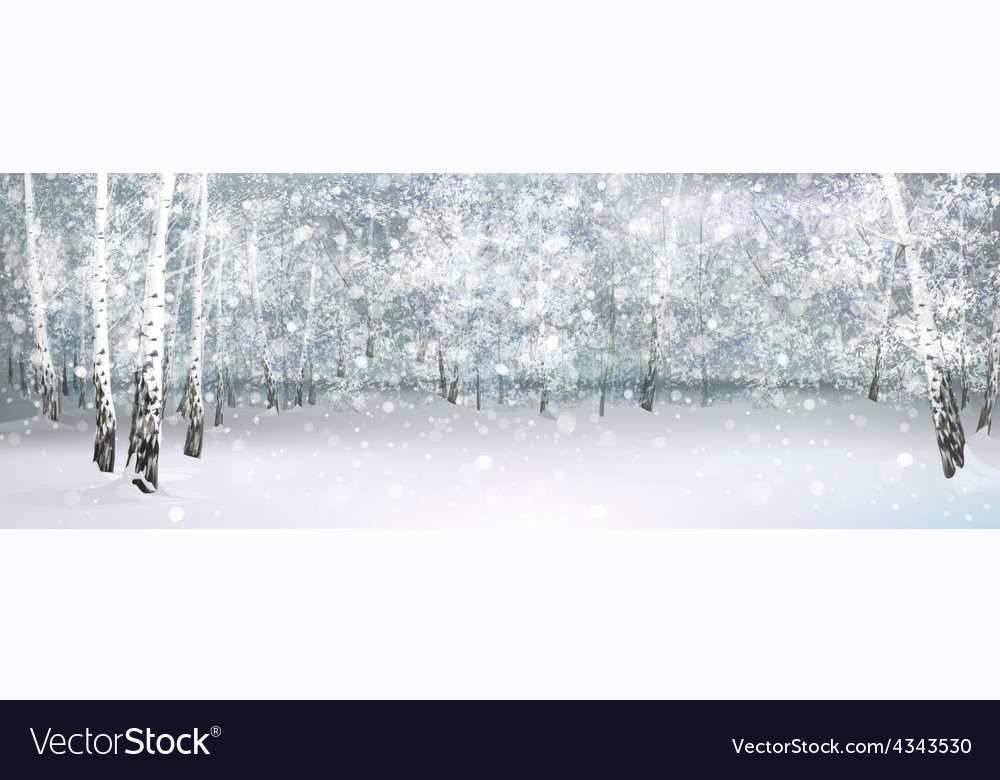 Nature birch background vector | Price: 1 Credit (USD $1)