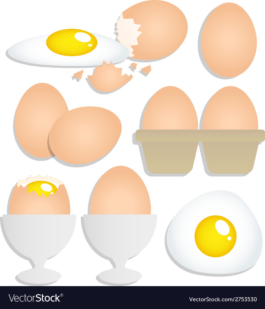 Set of eggs on white background vector | Price: 1 Credit (USD $1)