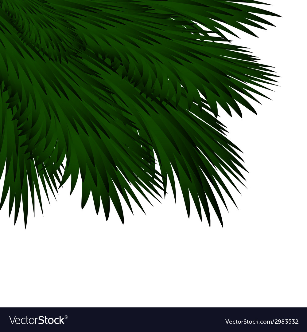 Christmas background with spruce branches vector | Price: 1 Credit (USD $1)