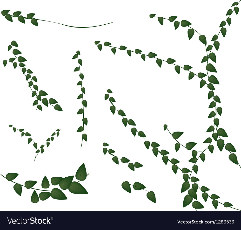 A set of creeper plant on white background vector