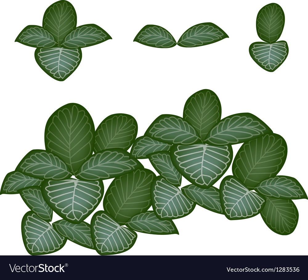 A set of nerve plant on white background vector   Price: 1 Credit (USD $1)