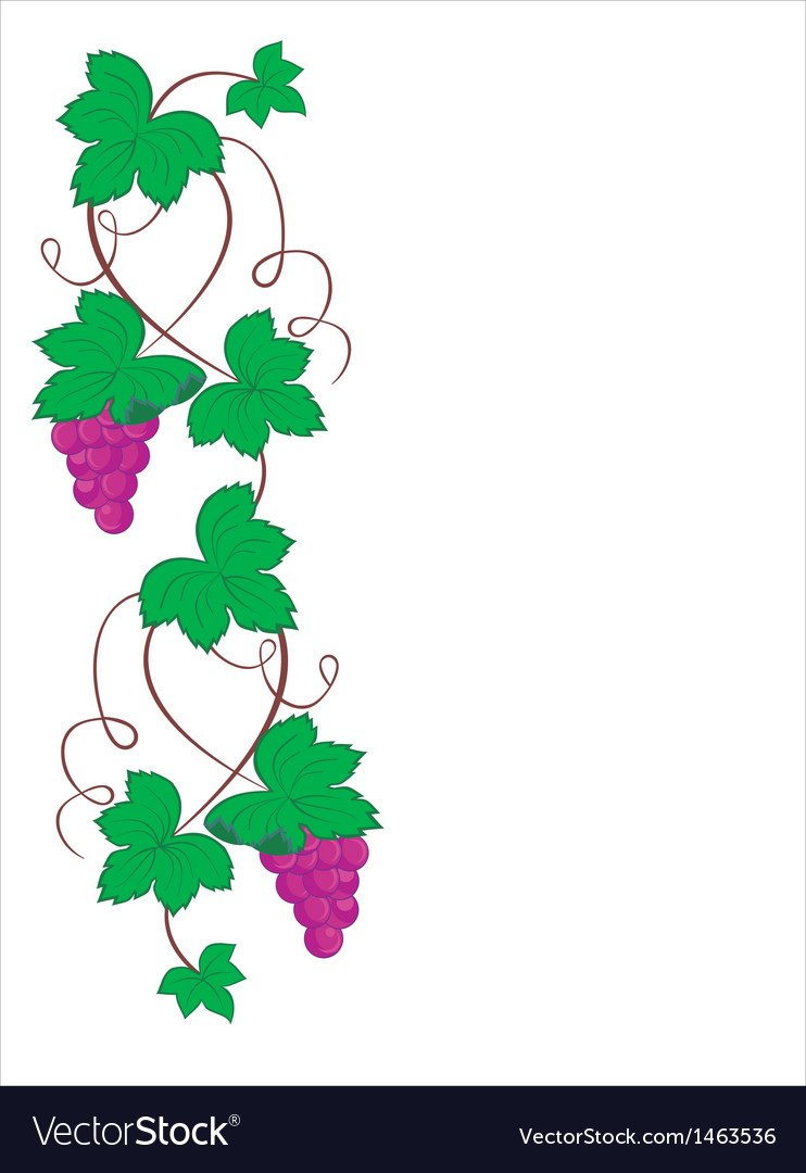 Grape background vector | Price: 1 Credit (USD $1)