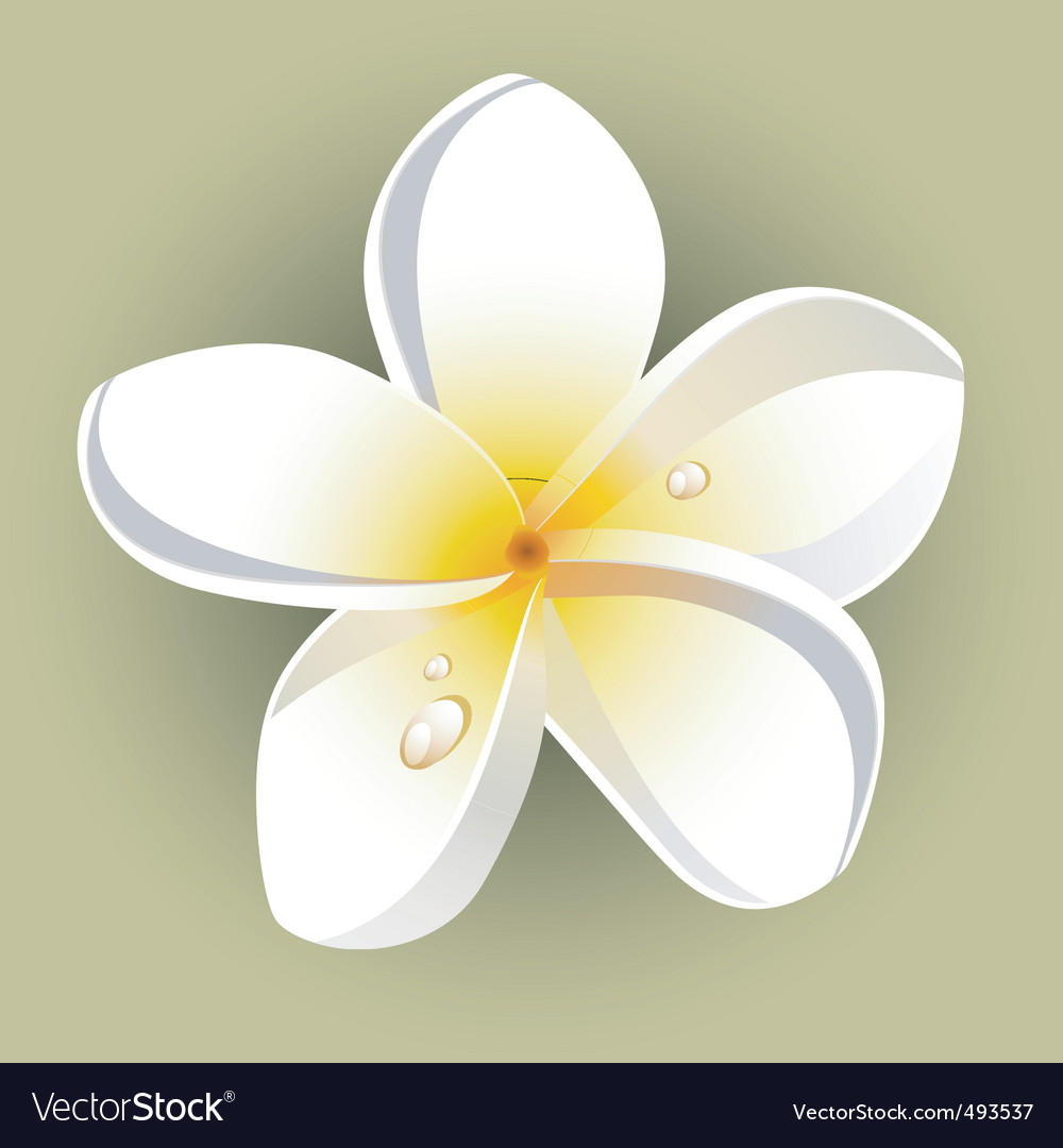 Garden flower vector | Price: 1 Credit (USD $1)