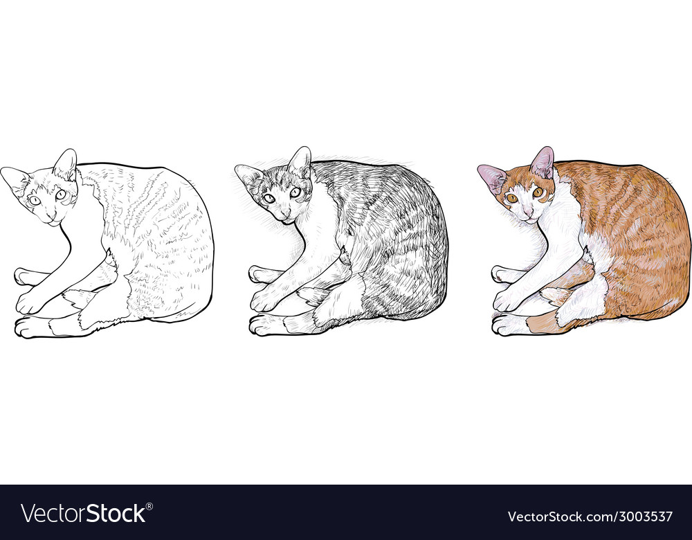Laying down cat vector | Price: 1 Credit (USD $1)