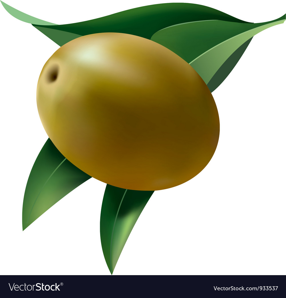 Olive leaf vector | Price: 1 Credit (USD $1)