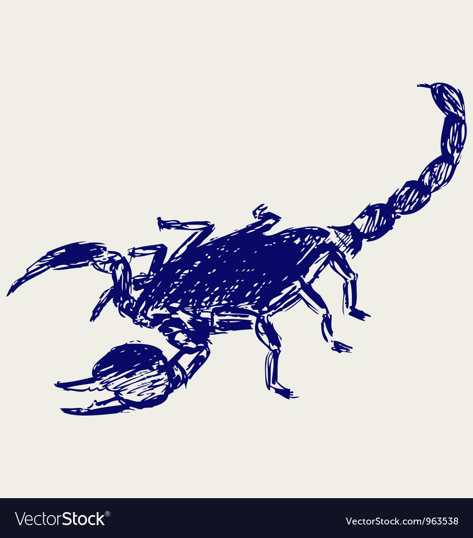 Emperor scorpion vector | Price: 1 Credit (USD $1)