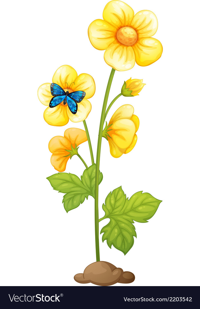 A plant with yellow flowers vector | Price: 1 Credit (USD $1)