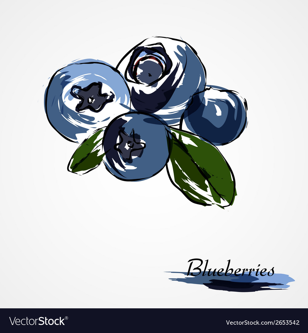 Blueberries huckleberries vector | Price: 1 Credit (USD $1)