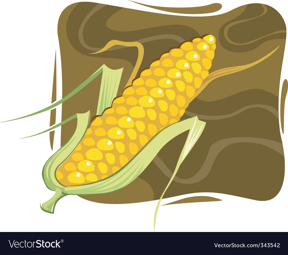 Maize vector | Price: 1 Credit (USD $1)