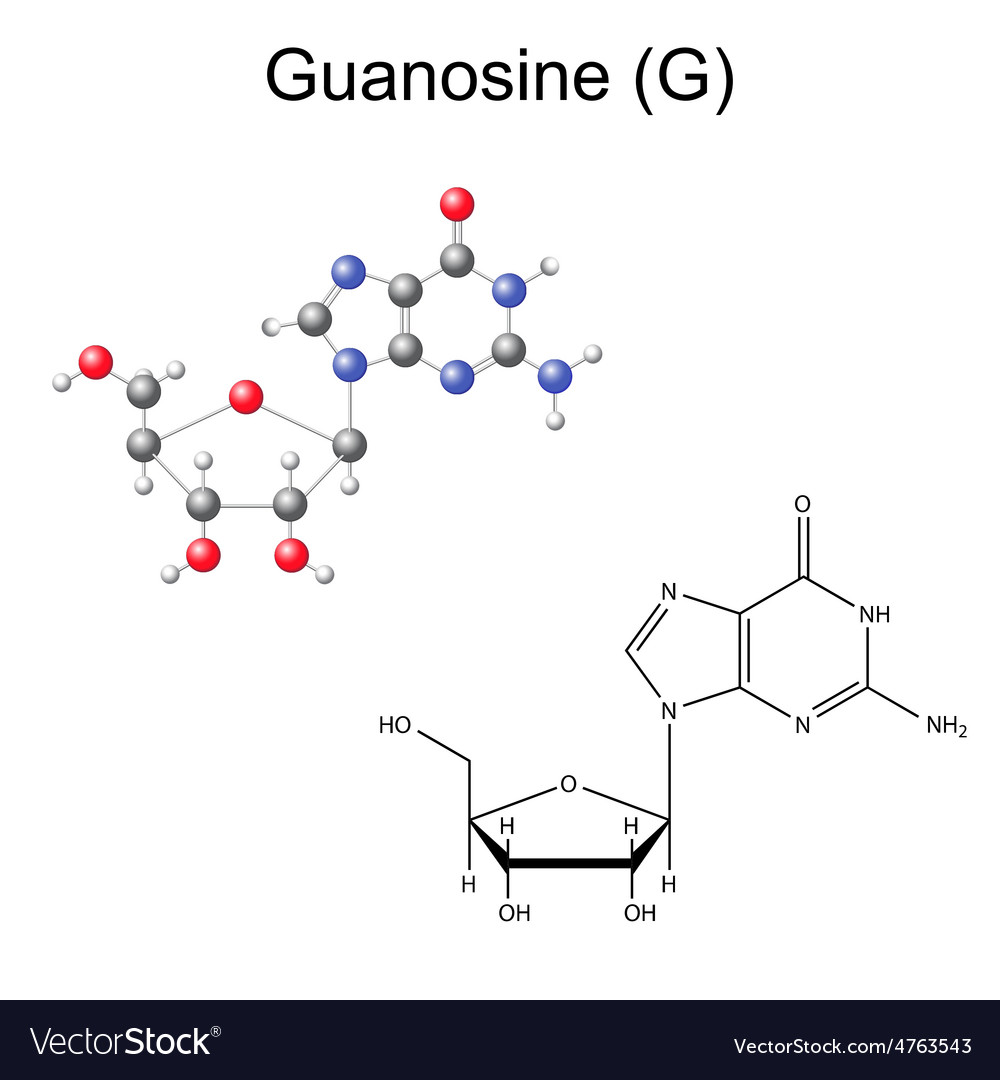 Chemical formula and model of guanosine vector | Price: 1 Credit (USD $1)