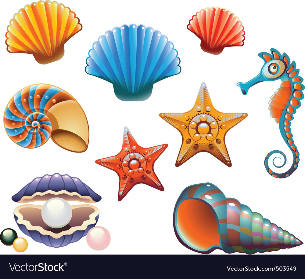 Seashell set vector | Price: 1 Credit (USD $1)
