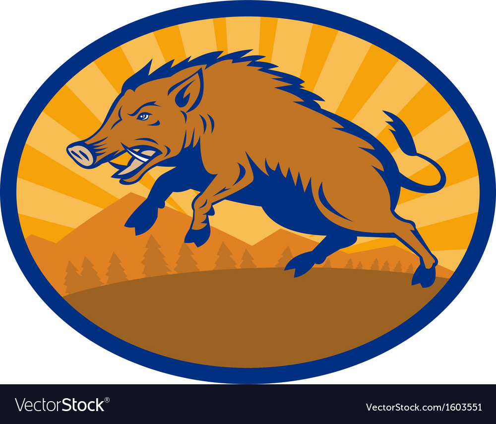 Wild boar pig razorback hog attacking vector | Price: 1 Credit (USD $1)