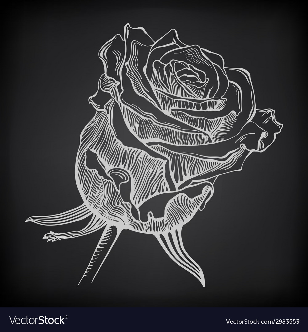 Black and white digital drawing sketch rose on vector | Price: 1 Credit (USD $1)