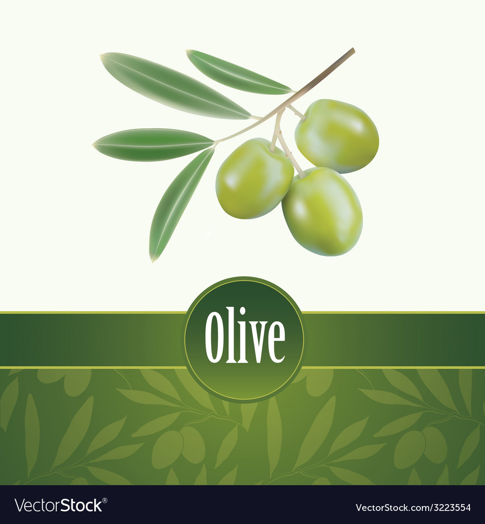 Olive oil decorative olive branch for labels pack vector | Price: 1 Credit (USD $1)