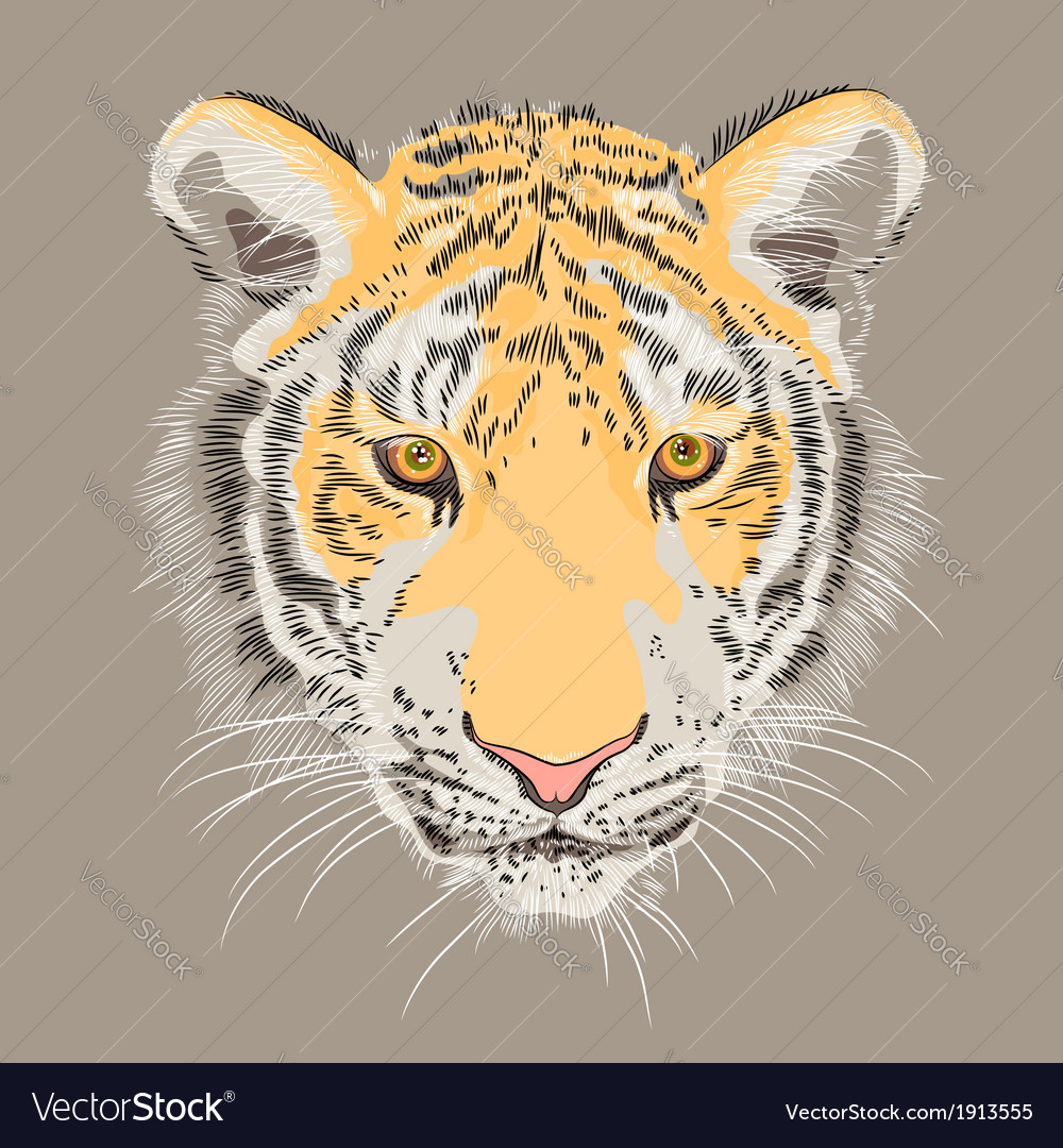 Serious amur tiger vector | Price: 1 Credit (USD $1)