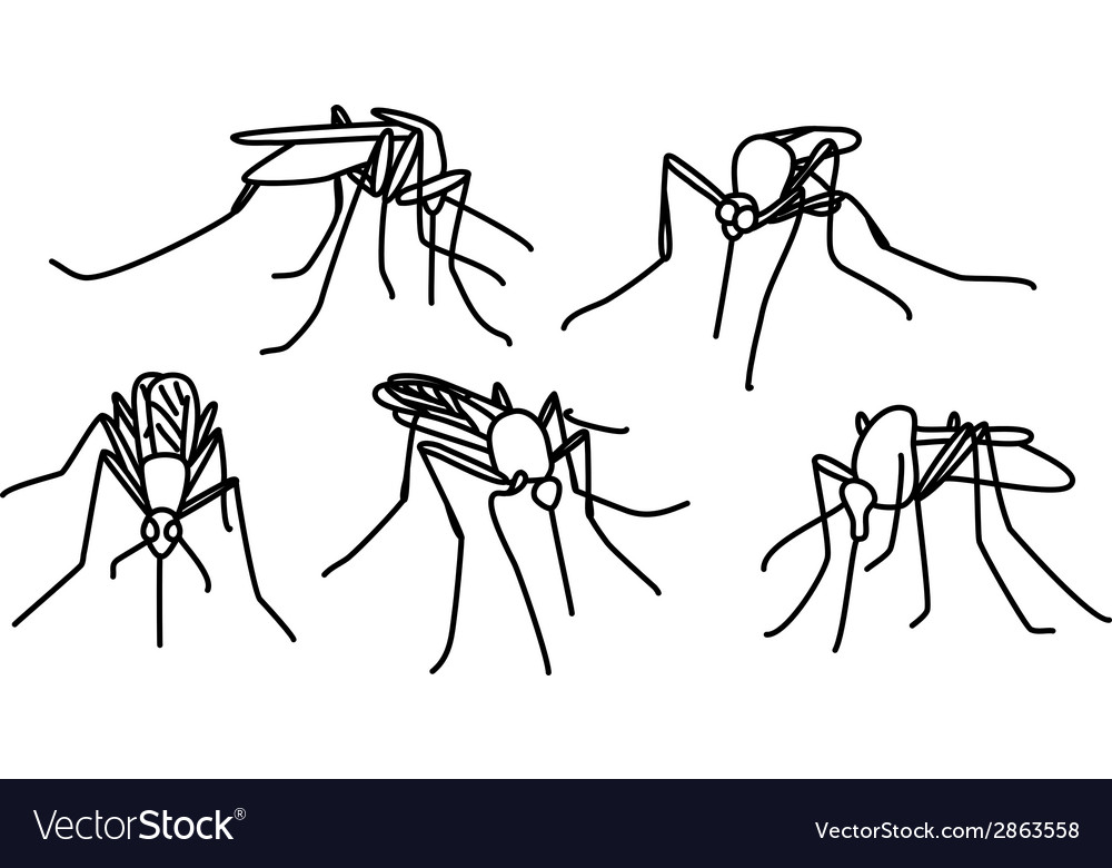 Biting mosquitoes vector | Price: 1 Credit (USD $1)