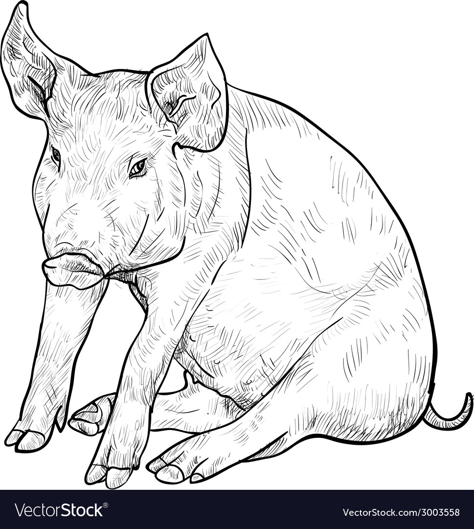 Drawing of pig vector | Price: 1 Credit (USD $1)