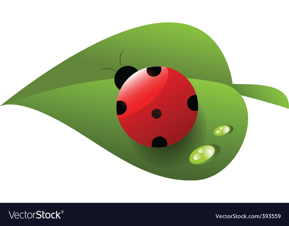 Ladybird on leaf vector | Price: 1 Credit (USD $1)