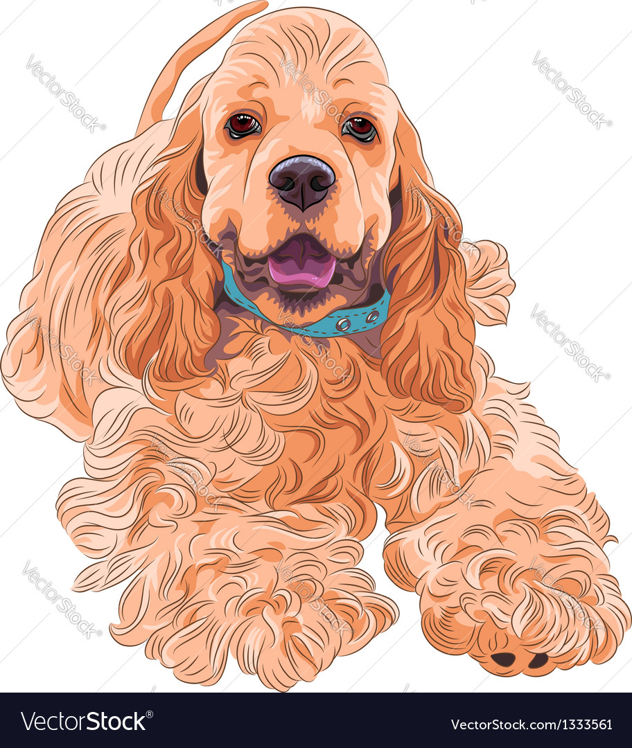 Cute sporting dog breed american cocker spaniel vector | Price: 3 Credit (USD $3)