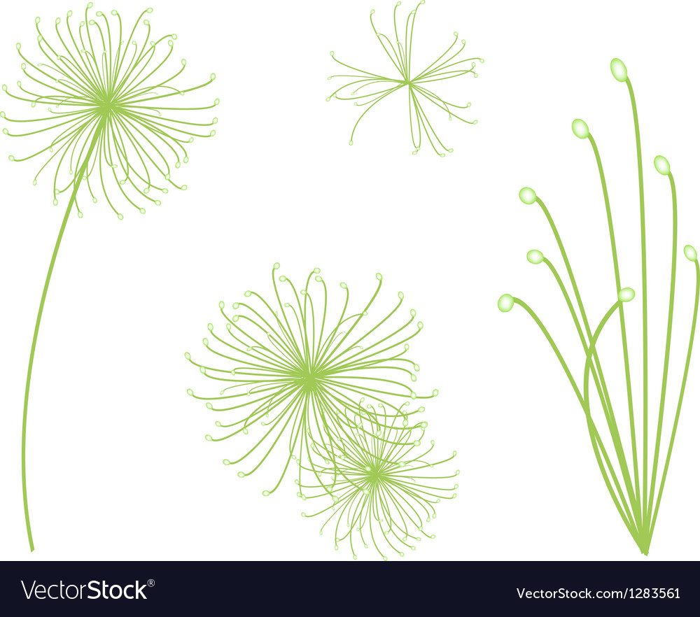 Set of cyperus papyrus plant on white background vector | Price: 1 Credit (USD $1)