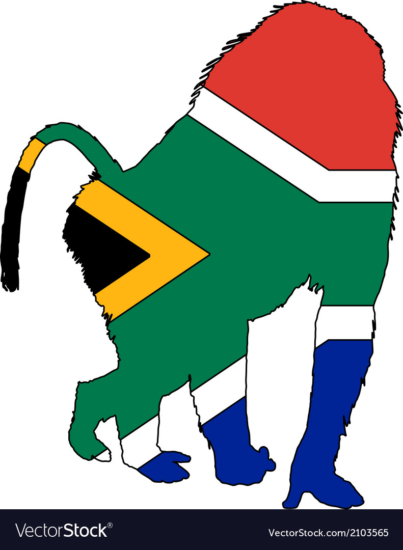 Baboon south africa vector | Price: 1 Credit (USD $1)