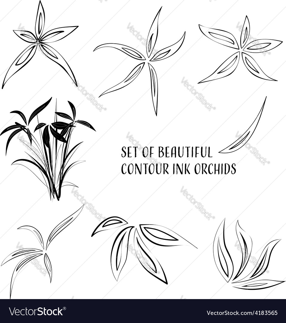 Contour ink flowers vector | Price: 1 Credit (USD $1)
