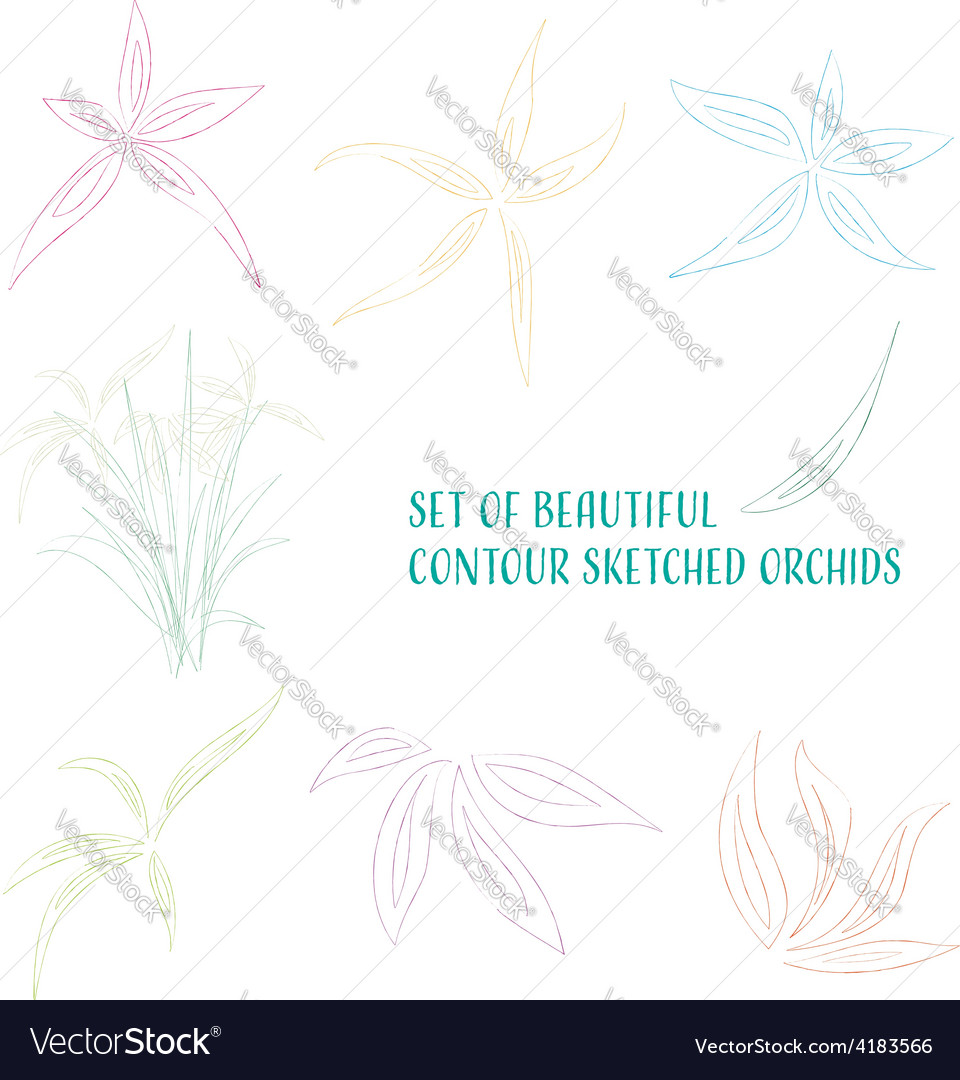 Contour sketched flowers vector | Price: 1 Credit (USD $1)