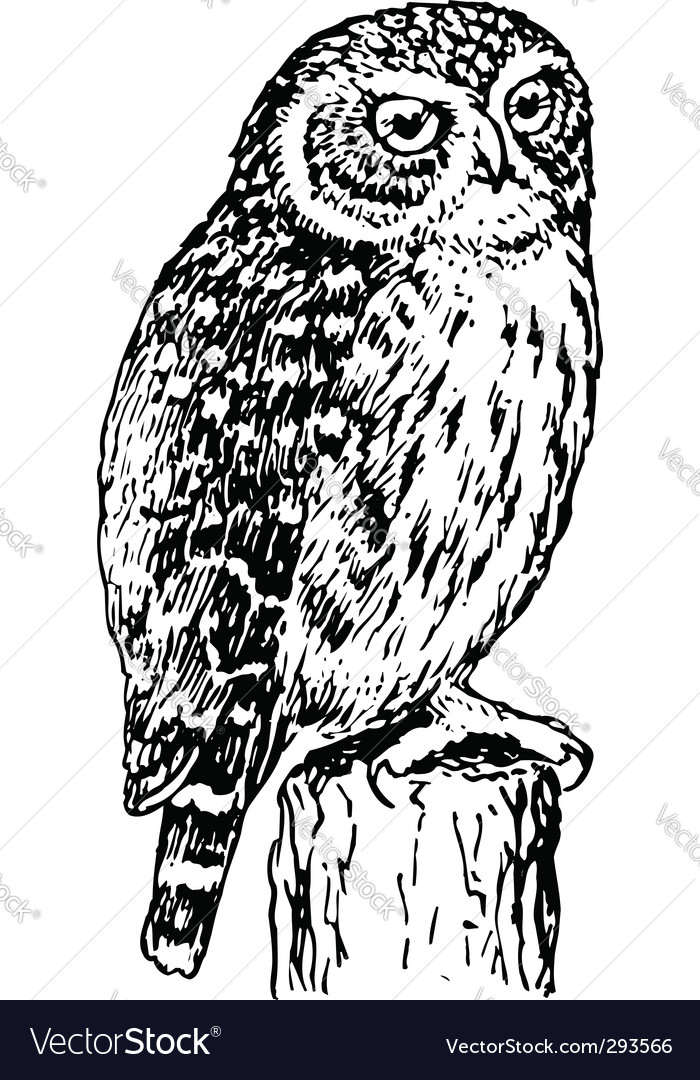 Horned owl vector | Price: 1 Credit (USD $1)