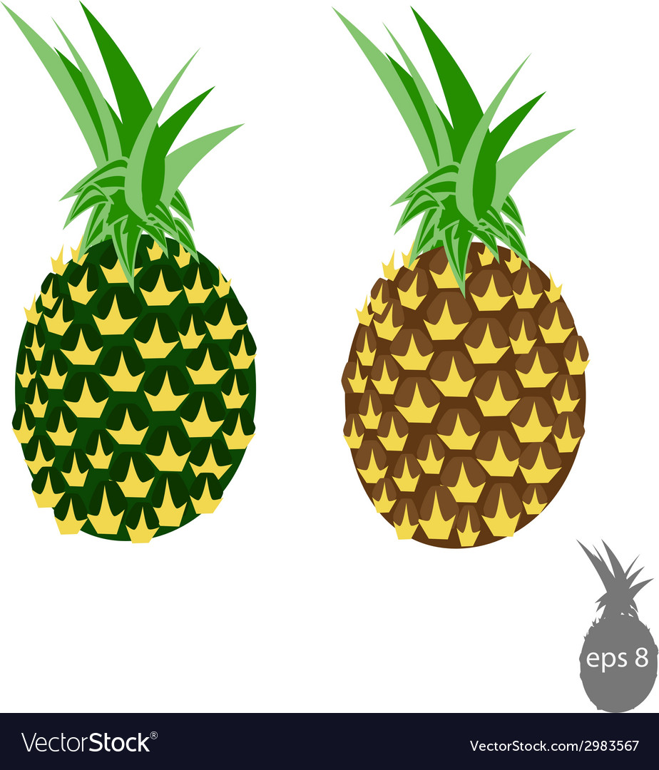 Pineapple vector | Price: 1 Credit (USD $1)