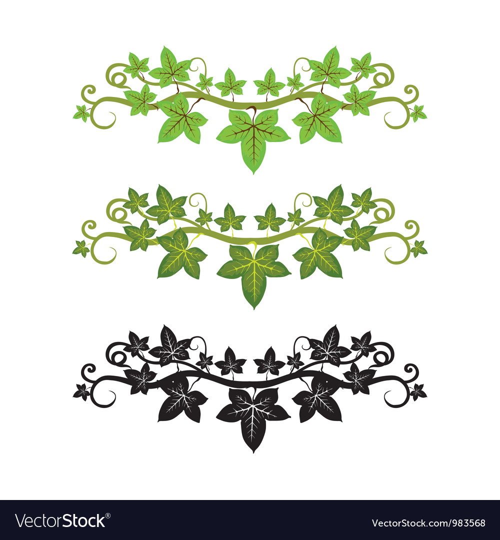 Ivy plant vector | Price: 1 Credit (USD $1)