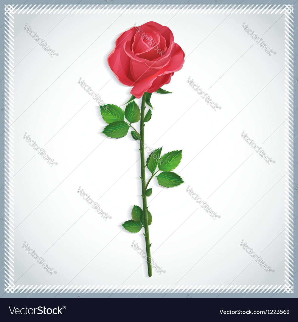 Flower red rose isolated vector | Price: 1 Credit (USD $1)