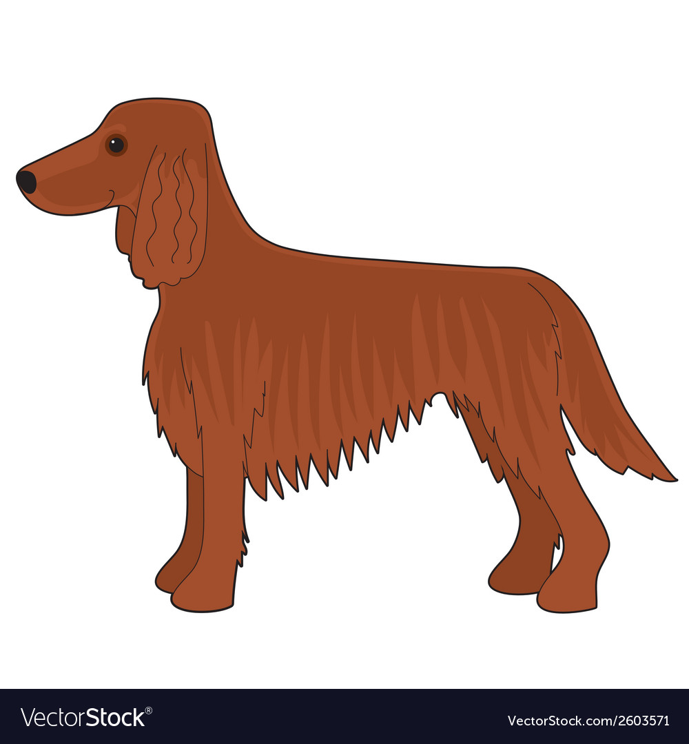 Irish setter dog vector | Price: 1 Credit (USD $1)