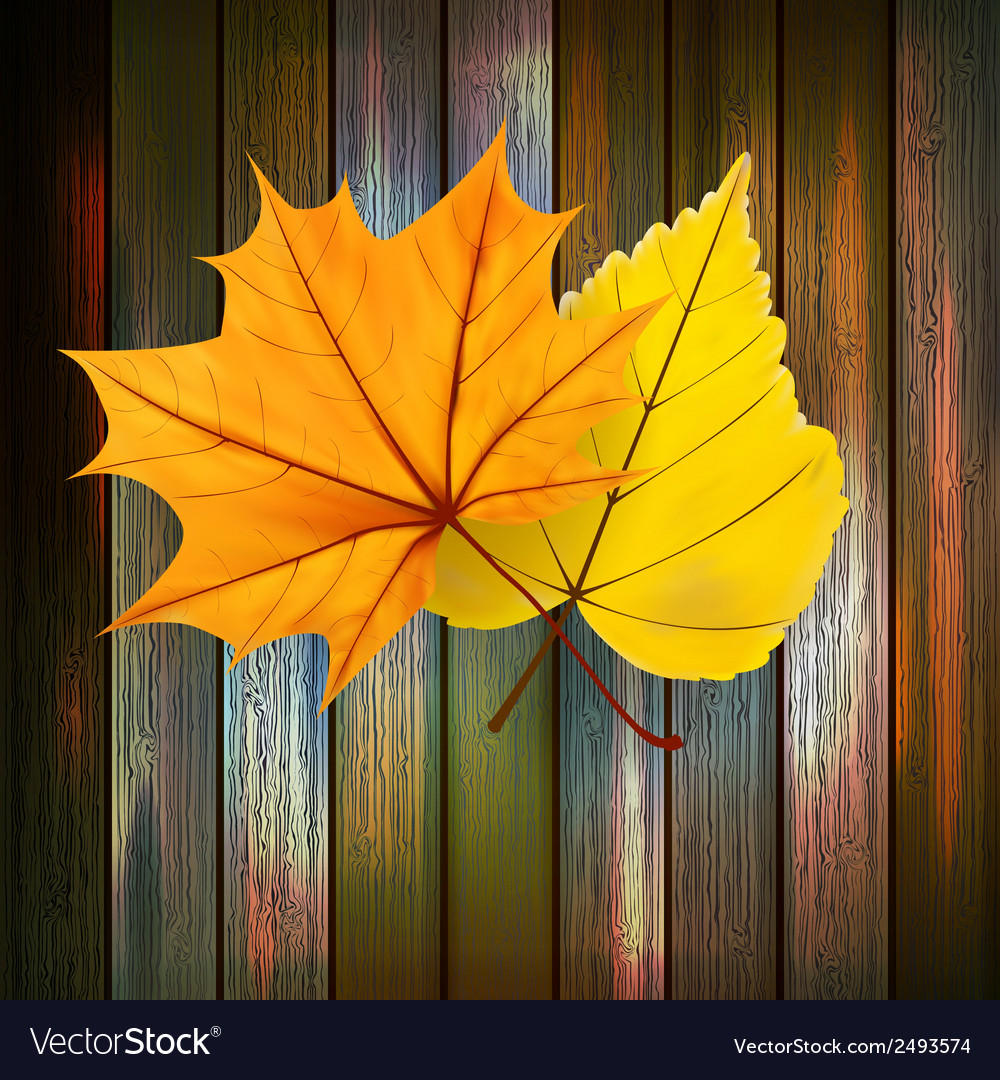 Autumn leaves over wooden background plus eps10 vector | Price: 1 Credit (USD $1)