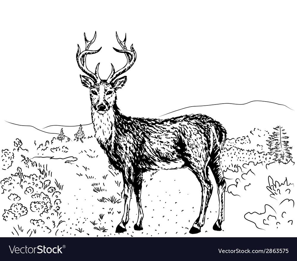 Sketch of reindeer vector | Price: 1 Credit (USD $1)