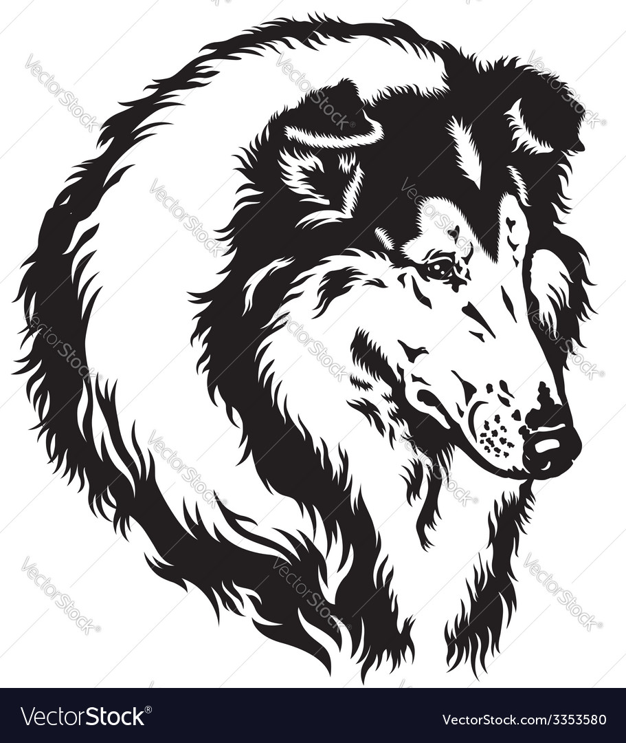 Collie head black white vector | Price: 1 Credit (USD $1)